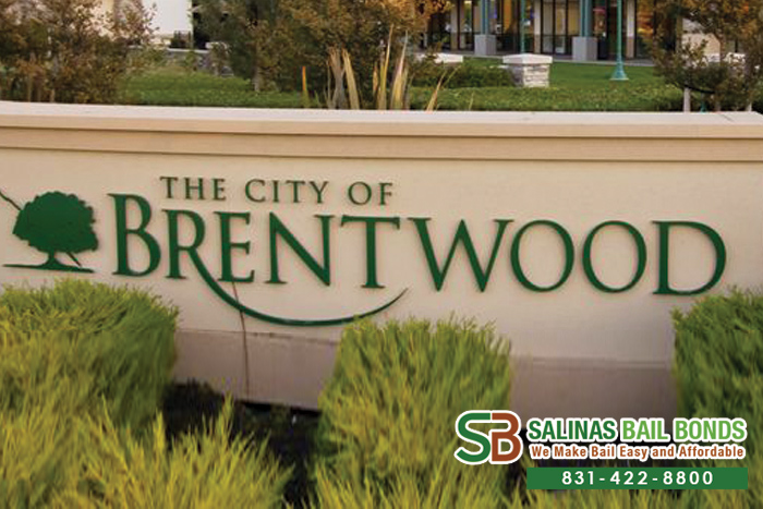 Brentwood Bail Bond Store