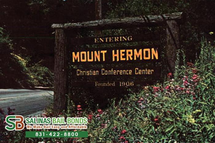 Mount Hermon Bail Bond Store
